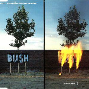 Bush – Swallowed